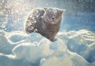 Депутаты защитят кошек от последствий зимы