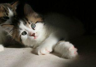 В древней Трое поселят кошек