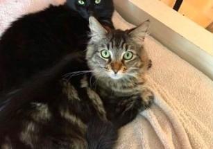 В Калифорнии арендовали квартиру для двух кошек