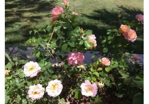 Где распускаются императорские цветы
